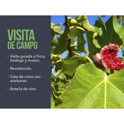 Visit and harvest Spanish